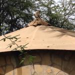 La scimmietta sul tetto