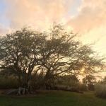 Photo de Puakea Ranch