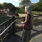 feeding the giraffe!