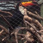 Foto de Zoo de Buenos Aires