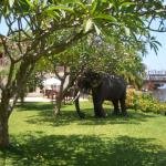 This is the riverside garden with ornamental elephant