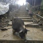 Foto Cat Cat Village
