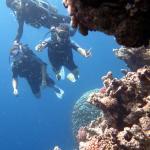 Bild från Three Corners Palmyra Resort