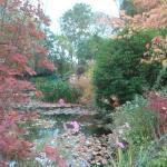 L'automne sur l'étang