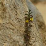 The Pinnacles Foto