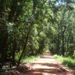 Foto de Karura Forest