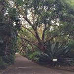 Botanical Garden University of Stellenbosch Foto
