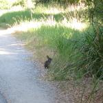 Critters, like this jack rabbit, abound just off the trail