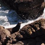 Cape Foulwind Seal Colony Foto