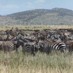 Serengeti in July