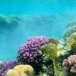 Domina Coral Bay Sultan Foto