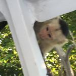 White faced monkey in the boat- so cute and friendly!