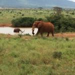 Wildlife Sun Safaris - Day Tours Foto