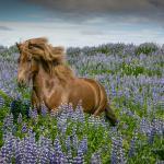 Enjoying Icelandic nature :)