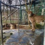 Tiergarten Schönbrunn - Zoo Vienna Foto