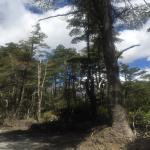 Volcan Villarica Foto