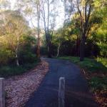 Malvern Urban Forest