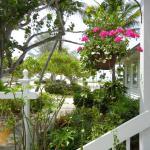 Island Inn Foto