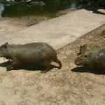 Foto de Santa Cruz Zoo