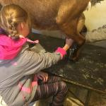 My daughter got to milk a goat!