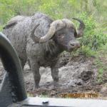 Photo de Idube Private Game Reserve Lodge