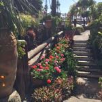 der Garten-ein Traum