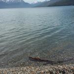 Foto de Lago Roca
