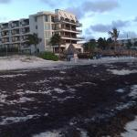 levels sargasso grass seaweed beach before dreams property - cleaned up at dreams beach daily