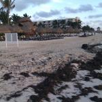 walk to dreams beach from direction puerto morelos town square - sargasso grass gone dreams beac