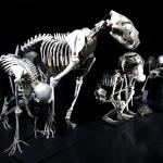 Dauerausstellung: vergleichende Anatomie