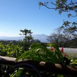 Photo of Finca Rosa Blanca Coffee Plantation & Inn