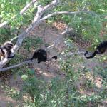 Monos por doquier