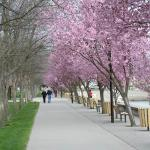 Walking in the spring in Coeur d'Alene City Park at Independence Point