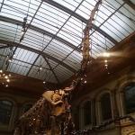 Dinosaurier in der Eingangshalle