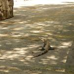 Cancun 046_large.jpg