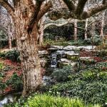 Photo de Arboretum et jardin botanique de Dallas