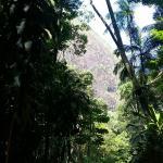 Tijuca National Park Foto