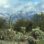 Arizona-Sonora Desert Museum Foto