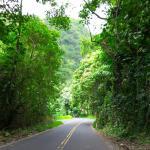 Road to Hana Foto