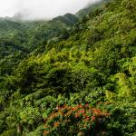 Cloud Forest at Upper Reaches of the Mountains
