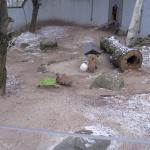 Helsinki Zoo (Korkeasaari Elaintarha) Foto