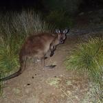 Foto de Parque nacional Flinders Chase