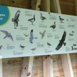 Great signage inside the hide telling you what you should or might be lucky enough to see !!