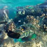 Photo de Port Ghalib Resort