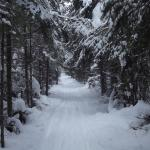 Banadad ski trails