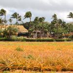 Tropical Gardens of Maui Foto