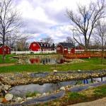 The Petting Farm
