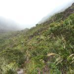 Ascenso al Volcan Barú por Paso Ancho, Volcán