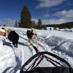 Winterhawk Dog Sled Adventures