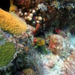 Dockyard Divers Foto